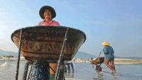 越南农民工作